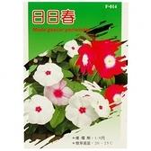 花草種子-日日春