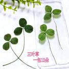 三葉草 押花乾花 壓花滴膠手機殼 植物標本 ,一份12片