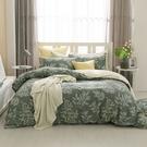 鴻宇 雙人加大兩用被套床包組 100%精梳純棉 莫凡比 台灣製C20103
