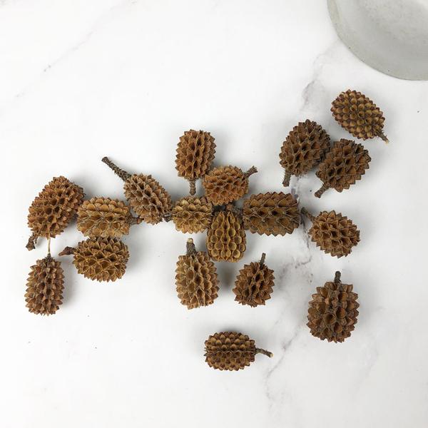 進口乾燥天然鳳梨松果- 乾燥花束 不凋花 拍照道具 室內擺飾 乾燥花材 裝飾鄉村風-1元/顆-10送1