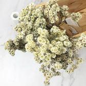 進口乾燥天然小野菊-乾燥花圈 不凋花 拍照道具 手作素材 室內擺飾 乾燥花材 -58元/束