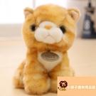 小寵物玩具小貓咪毛絨公仔可愛寶寶禮物迷你【小獅子】