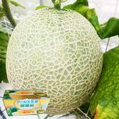 日本阿露斯洋香瓜(2入)5台斤含運組