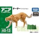 TOMICA AS-13 獵豹 AN13960多美動物園 公司貨TAKARA TOMY