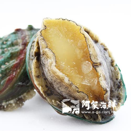 熟凍帶殼小鮑魚(18顆) 1kg±10%/盒