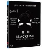 黑鯨 BD Black fish