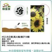 【綠藝家】H52.向日葵(風火輪)種子10顆