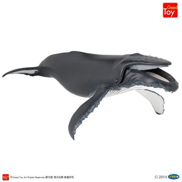 【Good Toy】法國 PAPO 56001 海洋生物 座頭鯨 Humpback Whale
