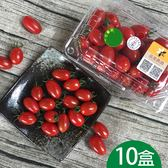 大雪山高海拔玉女小蕃茄10台斤含運組