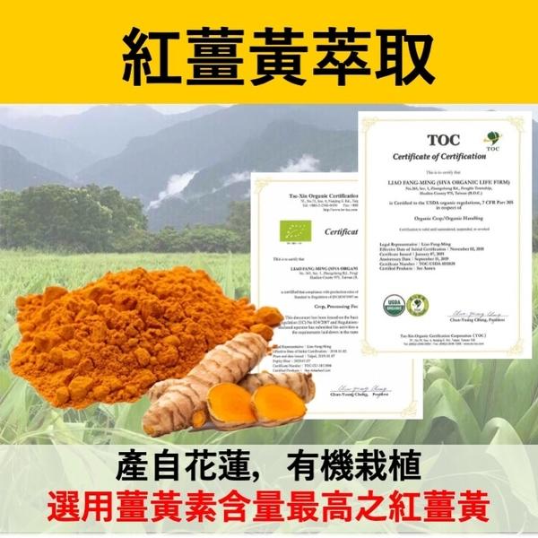 樟芝薑黃+B群膠囊 牛樟芝子實體 有機紅薑黃 酵母B群 B群 薑黃 牛樟芝 增強體力 現貨