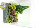 [整盆販售]特製壓克力多肉植物組合盆栽 ...