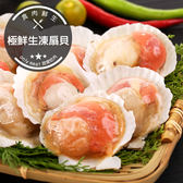 極鮮生凍扇貝(500g±10%/包)(約7-10顆)(食肉鮮生)