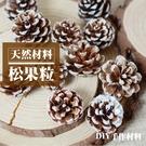 【04999】天然乾燥松果粒 乾果 聖誕節 花圈 DIY材料 香薰蠟燭材料 玻璃罩花材