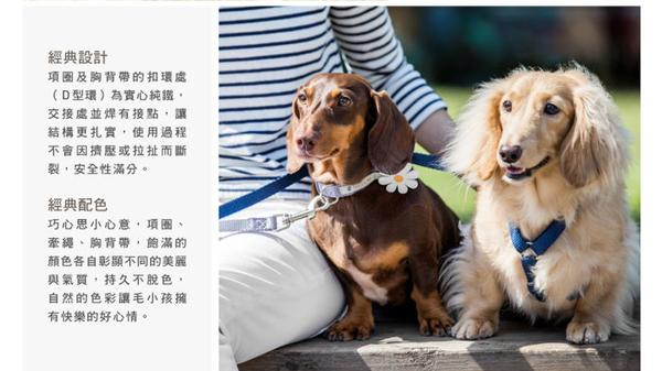 *KING WANG*台灣製TAILS&ME 尾巴與我《經典尼龍帶項圈》S號賣場