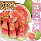 【家購網嚴選】屏東高樹特產 精選紅心芭樂5斤裝/盒 (7-11顆)