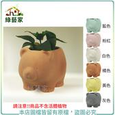 【綠藝家】多肉專用透氣矽砂釉陶盆-小肉熊