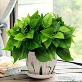 綠蘿仿真綠植套裝仿真花草植物家居客廳裝飾盆栽擺設辦公室擺件 韓語空間