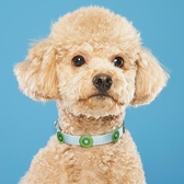 狗狗貓咪項圈脖圈中大小型犬頸圈貓咪飾品貓圈寵物項圈狗狗用品
