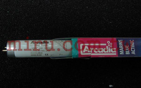 【西高地水族坊】英國阿卡迪亞Arcadia 海水長效培養燈管MARINE BLUE ACTINIC T8 FL (36W)