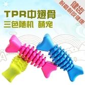 【狐狸跑跑】TPR狗狗玩具 骨頭玩具 泰迪比熊磨牙潔齒玩具WJ007500