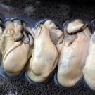 ㊣盅龐水產 ◇廣島牡蠣清肉2L◇1kg/包/30~35顆 零售$665元/包 生蠔 清肉 歡迎 餐廳 批發 優選食材