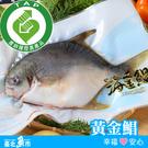 【台北魚市】產銷履歷 黃金鯧 400g~450g