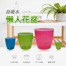 【博士韋爾健康生活館】自動吸水 植物 盆...