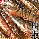 ㊣盅龐水產 ◇明蝦8P◇零$515元/淨重420g±5%/盒 超低價 批發 零售 餐廳 夯肉