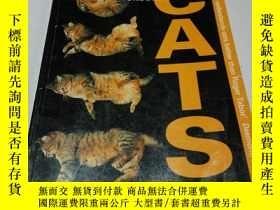 二手書博民逛書店UNDERSTANDING罕見CATS(英文)Y212829