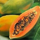 台農2號木瓜10台斤5-7粒