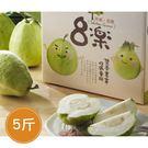 Freshgood・森芭樂園•芭樂郭爸爸-珍珠芭樂(5斤/盒)