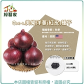 【綠藝家】C14-1.美樂洋蔥(紅皮)種子0.33克(約100顆)