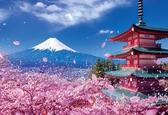 富士山浅間神社 /300P/Beverly/世界遺產/日本進口拼圖