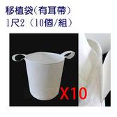 移植袋.美植袋1尺2(有耳帶)//型號PB12(10個/組)