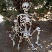 (交換禮物)骷髏骨架模型萬圣節裝飾仿真人骨頭尸體密室逃脫道具鬼屋恐怖擺件
