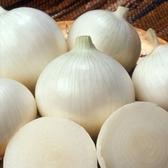 CARMO美國洋蔥 園藝種子(0.5g) 白洋蔥 紅洋蔥【FR0055】