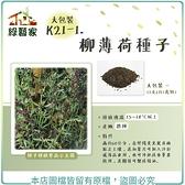 【綠藝家】大包裝K21-1.柳薄荷種子12克(約1萬顆)(神香草.海壽花)