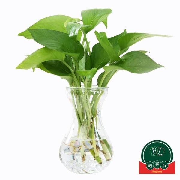 【6個裝】透明玻璃花瓶簡約水培植物花盆水養綠蘿插花瓶【福喜行】