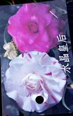 [水晶皇后茶花苗] 3.5吋 觀賞茶花盆栽 活體花卉盆栽 半日照 需換盆才會比較快開花