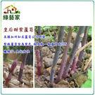 【綠藝家】C14.皇后甜紫蘆筍種子2顆...