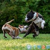 狗狗用品寵物項圈脖圈鈴鐺金毛拉布拉多狗項圈
