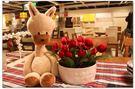 【發現。好貨】超萌系列~呆呆羊駝公仔 神獸羊駝娃娃 布偶玩具羊駝公仔 羊造型娃娃