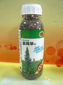 亞積Chia Seed(野生鼠尾草籽)430g/罐(或譯奇雅籽/奇異籽)