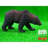 【MOJO FUN 動物模型】動物星球頻道獨家授權 - 灰棕熊 387216
