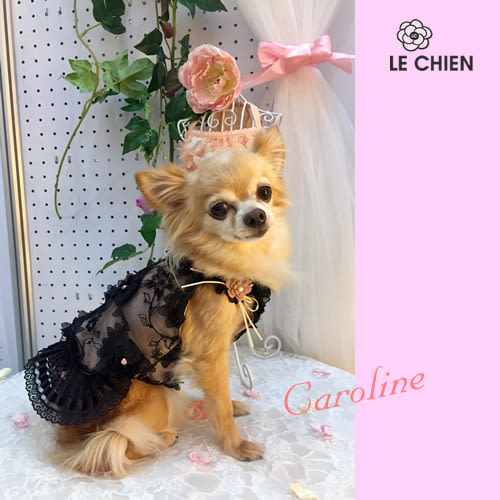 ★OBO CLUB HOUSE☆ PAZO   Caroline蕾絲花漾洋裝