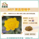 【綠藝家】H57.黃晶菊種子0.12克(約70顆)