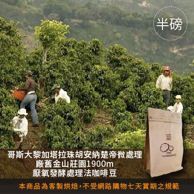 【咖啡綠商號】哥斯大黎加塔拉處理廠舊金山莊園1900m厭氧發酵處理法咖啡豆(半磅)