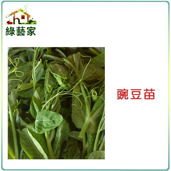 【綠藝家】E07.豌豆苗(快炒店的豆苗菜)種子100顆