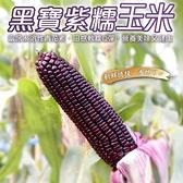 【果農直配-全省免運】黑寶水果玉米x5台斤±10%(9-11條)