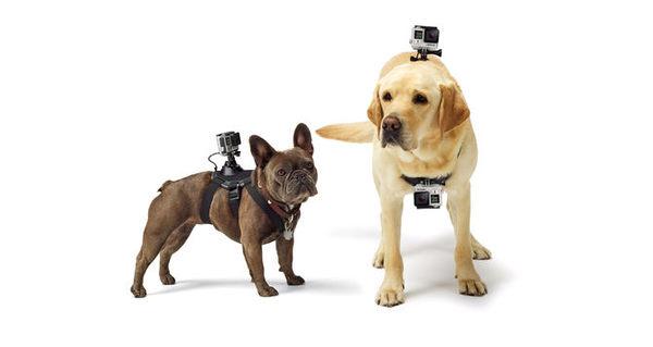晶豪泰 分期0利率 GOPRO ADOGM-001 Fetch 寵物專屬綁帶 公司貨 Mounts 掛載配件